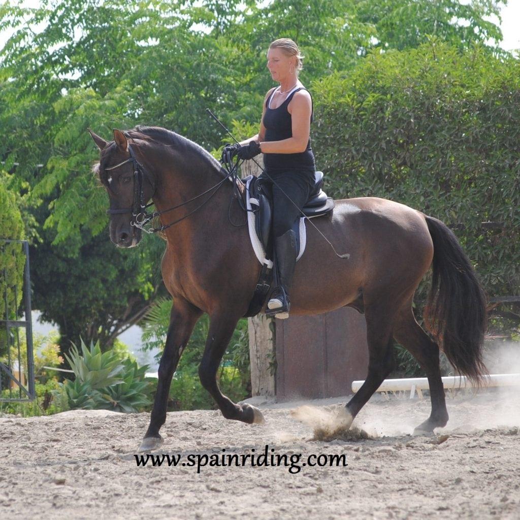 Horseback riding, dressage, Fuengirola, Marbella