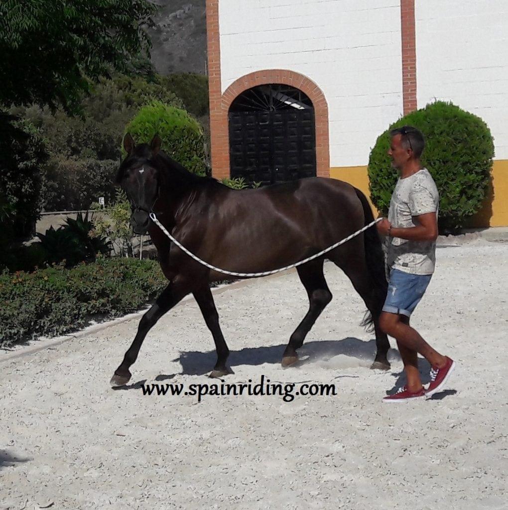 Marbella Natural Horsemanship