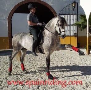 horsebackriding spain spanish walk