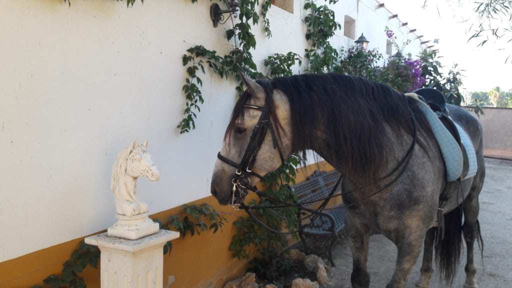 Horseback riding Spain Classical Dressage Marbella